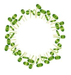 Microgreens basil arranged in a circle white vector