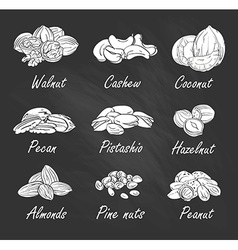 set of hand sketched nuts on chalkboard in hand vector image