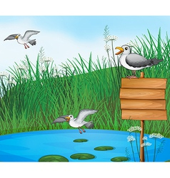 Three birds at the pond with a signboard vector