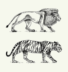Wild cats set lion and tiger engraved hand drawn vector