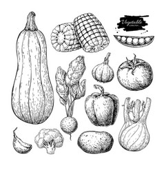 vegetable hand drawn set isolated vector image vector image