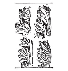 Acanthus leaves an ornament may be carved vector