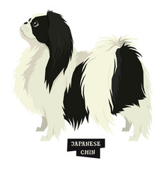 dog collection japanese chin isolated object vector image