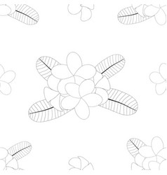 plumeria on white background vector image