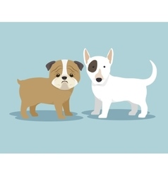 purebred dogs design vector image