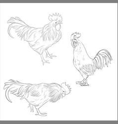 sketch of cocks vector image