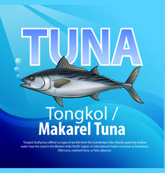 Tongkol or mackerel vector