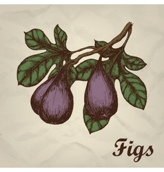 Branch with figs hand drawn vintage style vector