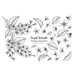 collection set of purple wreath flower and leaves vector image