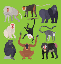 different types of monkeys ape breed rare animal vector image
