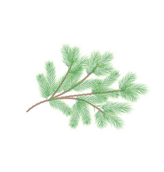 green pine branch fir tree branch vector image