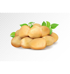 realisic potatoes grope on transparent vector image