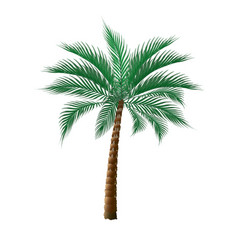 Tropical dark green palm tree isolated on white vector