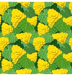 Yellow grapes and leaves vector