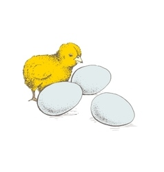 egg and chicken vector image vector image