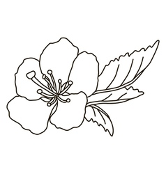 Hand drawn cherry blossom vector