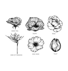 collection set flower drawing vector image