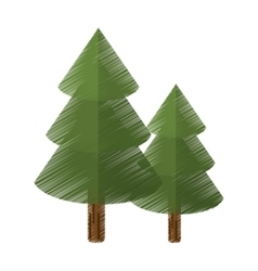 colored canadian evergreen tree pine vector image