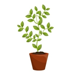 Plant with leaves growing graphic vector