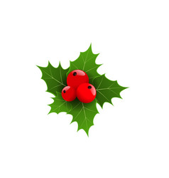 realistic 3d christmas berries and green leaf vector image