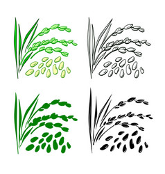 rice set natural organic food vector image