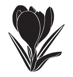 crocus silhouette vector image vector image