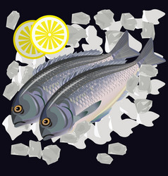 fishes dorada on ice vector image