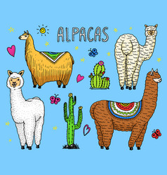 set of cute alpaca llamas or wild guanaco vector image