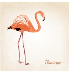 Beautiful pink flamingo bird isolated vector image vector image