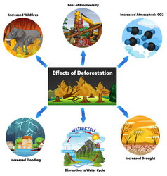 Chart showing effects deforestation vector
