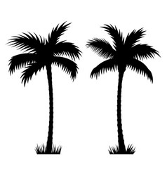 Palm tree 002 vector