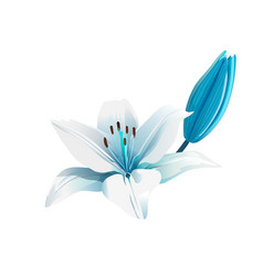 white and blue flower isolated vector image