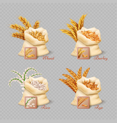 agricultural cereals sacks isolated on transparent vector image