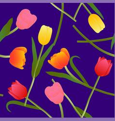colorful tulip on blue violet background vector image
