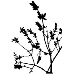 floral silhouette vector image vector image