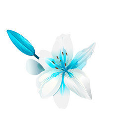 beautiful white and blue flower isolated vector image