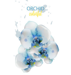Blue orchid flowers watercolor isolated vector