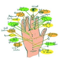 Reflexology Hand Chart vector image