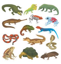 reptile nature lizard animal wildlife wild vector image