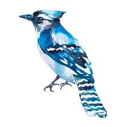 Blue jay isolated on a white background vector image
