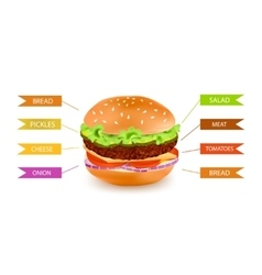 Fastfood Hamburger Filling Infographics vector