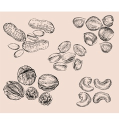 Hand Drawn Nuts vector