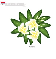 Plumeria frangipanis a popular flower in kiribati vector