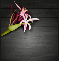 Tropical Flower on a Dark Wooden Background vector image