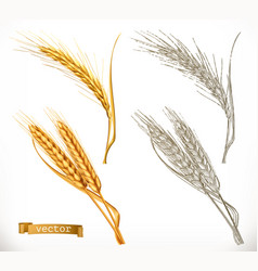 ears of wheat 3d realism and engraving styles vector image