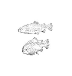 fish trout hand drawn set vector image