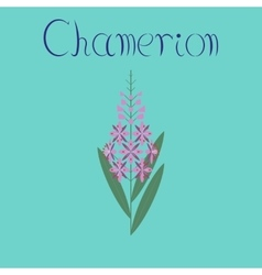 Flat on background herbal chamerion vector