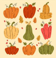 hand drawn sketch line art pumpkin vector image