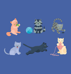 cat breed cute kitten pet portrait fluffy young vector image