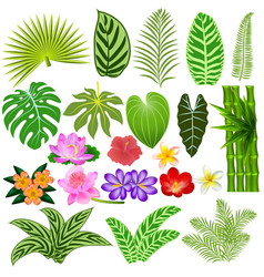 a set of tropical leaves and flowers on a white vector image vector image